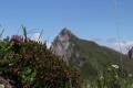 0031Fotowettbewerb - Alpenrosen - von Urs Furrer, Erstfeld