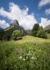 0305Fotowettbewerb - Blumenpracht - von Dani Gnos, Erstfeld