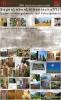 11784 - 2006 SagenLebenLeiden(schafft)! - Sagen in Holz gehauen