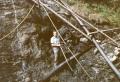 Foto 09184 - Bissig Paul im Bauenwald