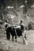 Foto 720 - Viehhandel in der Rütti