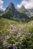 0316Fotowettbewerb - Blumiges Gitschenen - von Dani Gnos, Erstfeld