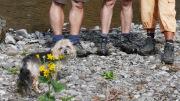 Zehn Beine beim Wasserfall Lauweli